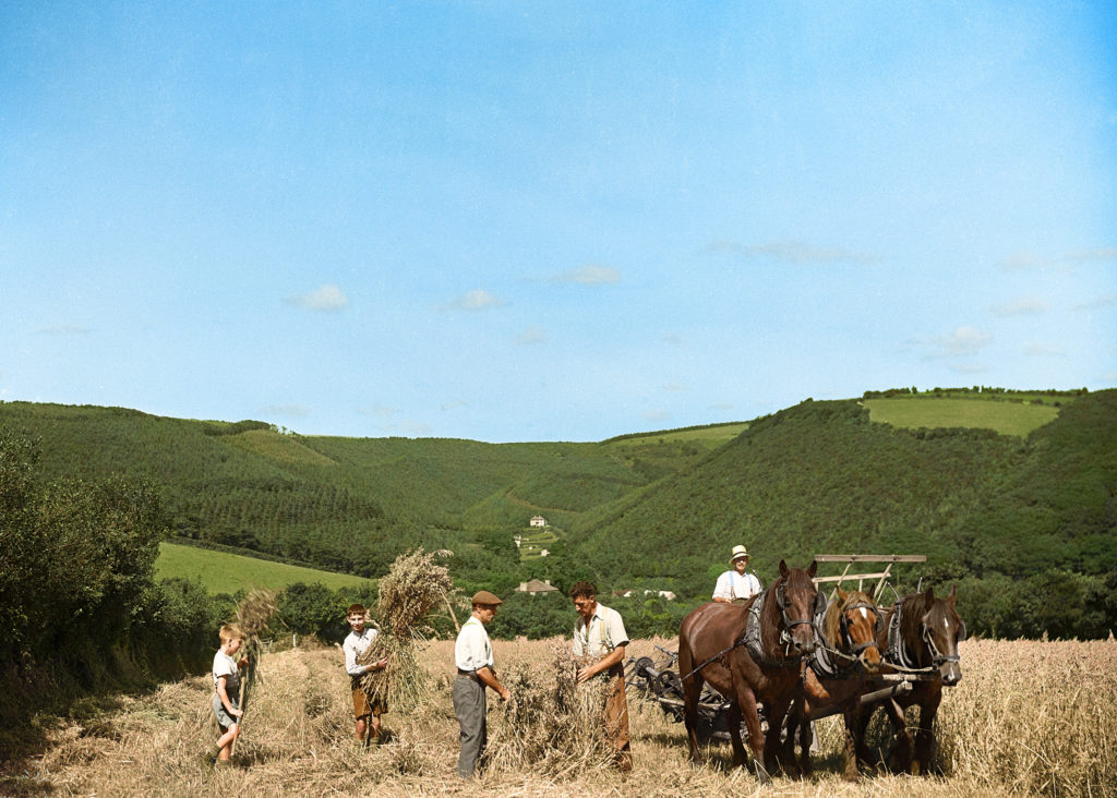 A colourised George Ellis photograph showing men and boys at the harvest near Bodmin in 1940