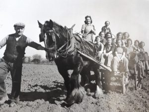 Black and white photograph of Land Girls in cart with horse.