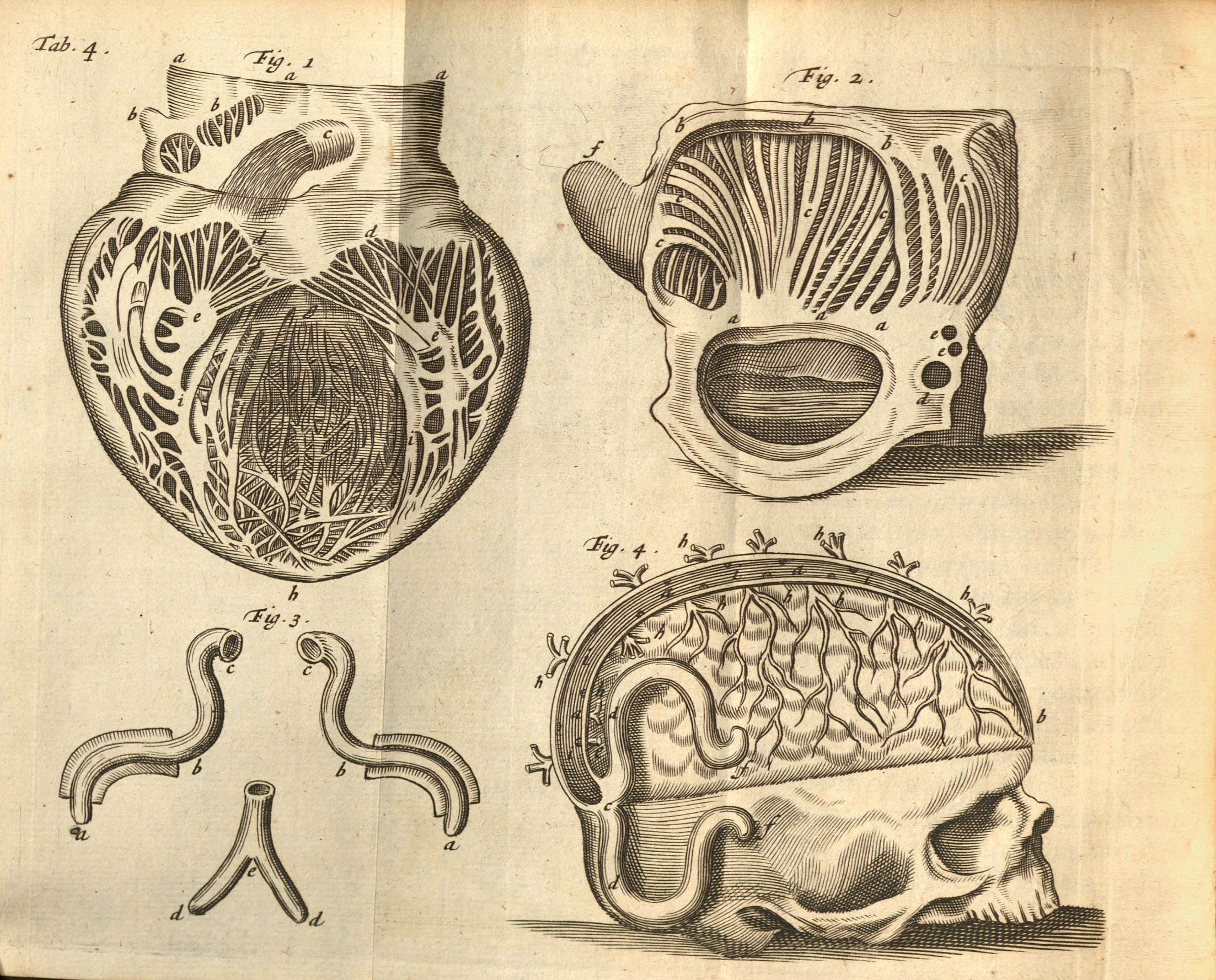 Scan of old diagrams of a human heart