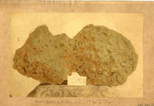 Old photograph of a large gold nugget