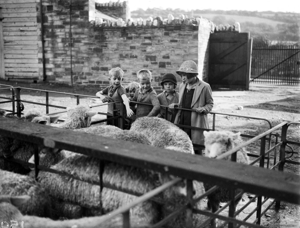 Photograph of a sheep market.